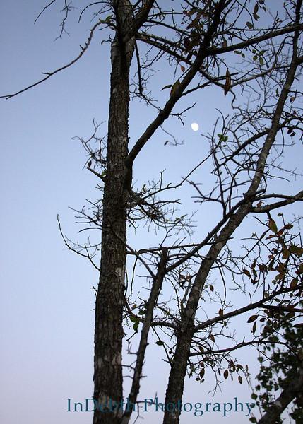 0607 Austin Tree 5X7