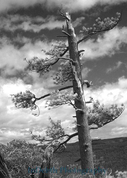 0491 Tree B