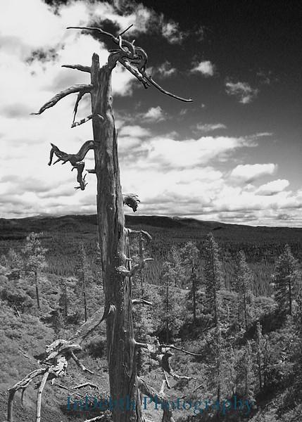 0485 Tree C