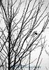 5098 Topeka tree 5X7