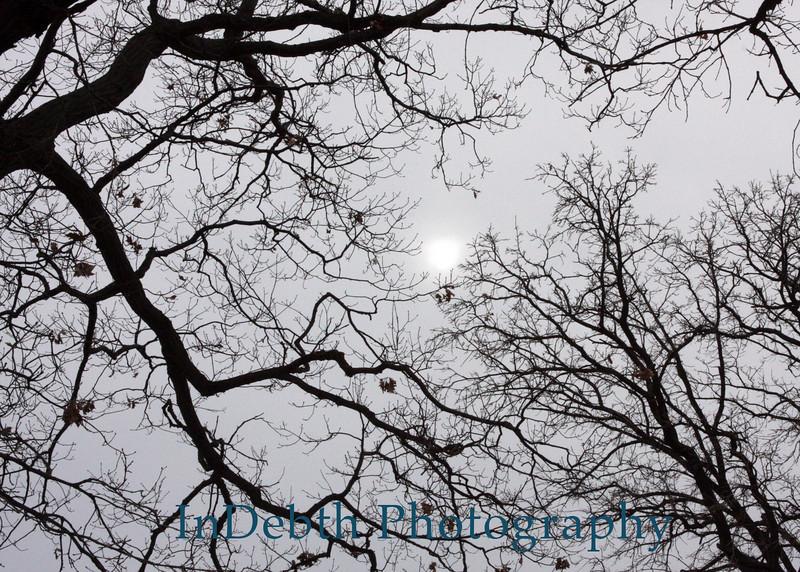 0905 Toledo tree 5X7