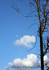 0617 Austin tree X7