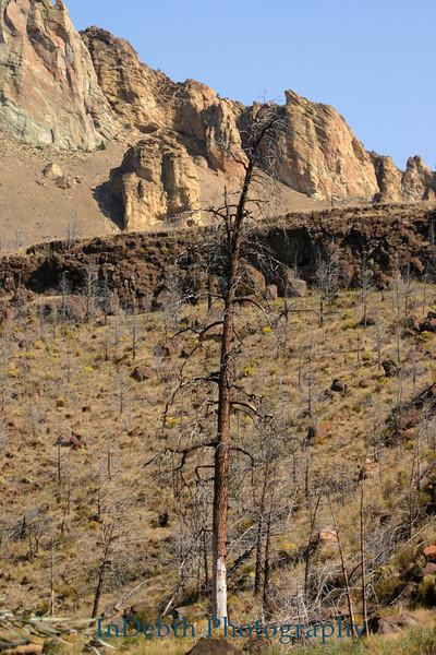 9797 Bend tree