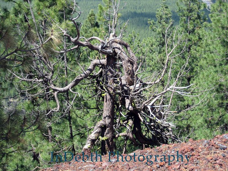 0481 Bend tree