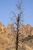 9772 Bend tree