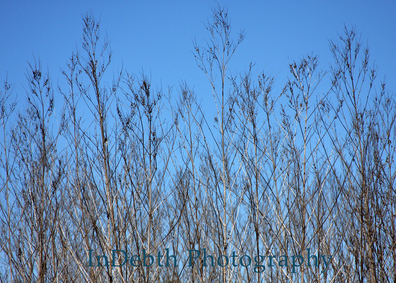1457 Austin trees 5X7