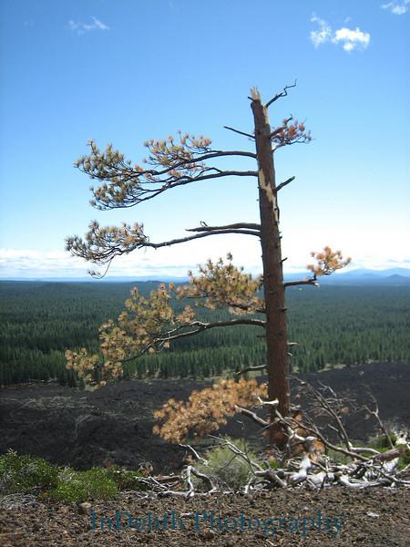 0494 Bend tree