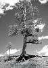 0486 Tree