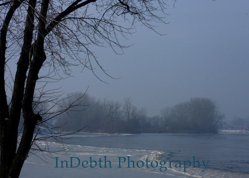 0778 Ottawa River tree 5X7