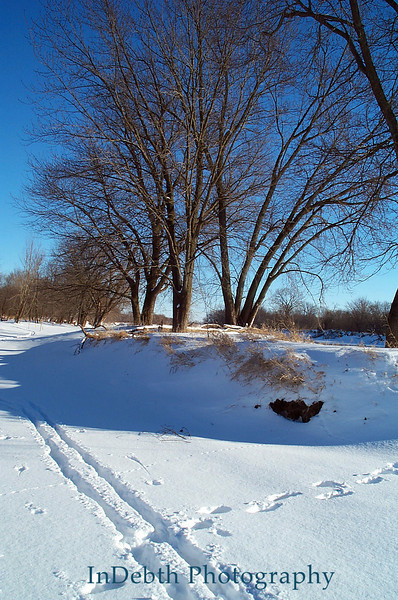 0336 CR winter trees