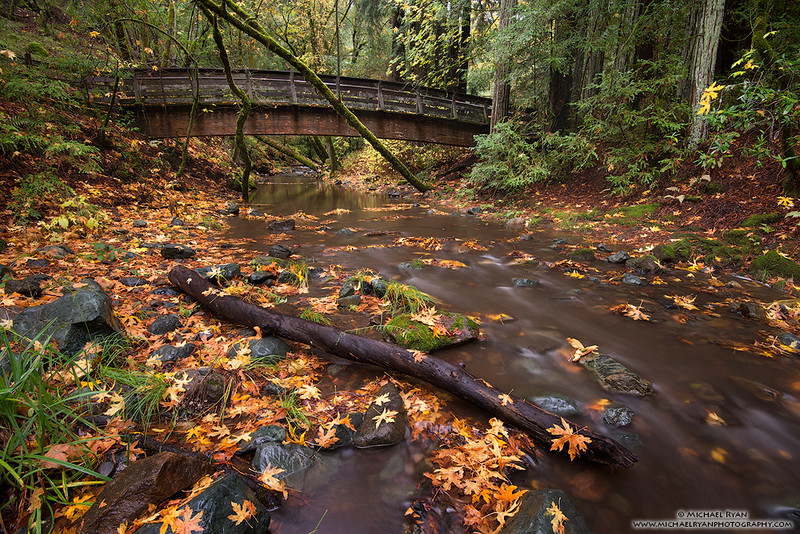 Sonoma Creek Fall