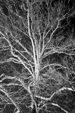Ice Storm 2-15-2008