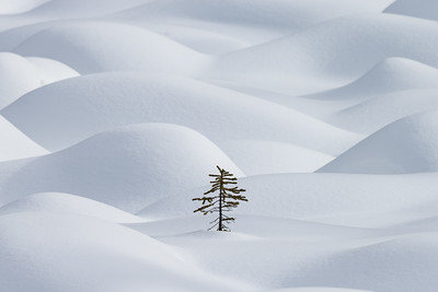 Lost in the snowdrifts