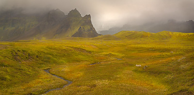 Iceland Fall Scape along southcoast with sheep_Pano
