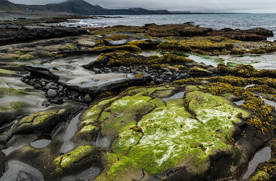 Seaweed and volcanic rock by the sea