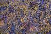 Seaweed Abstract
