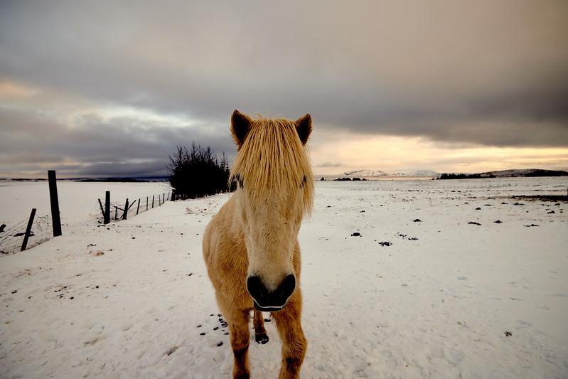 IcelandSelectsD85_1313
