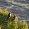 At the end of that first day we got to see millions of Puffins at Dyrholaey...