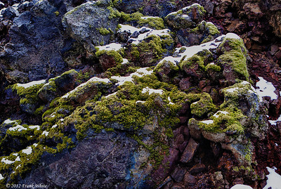Moss on volcanic rocks, at the Blue Lagoon thermal baths.