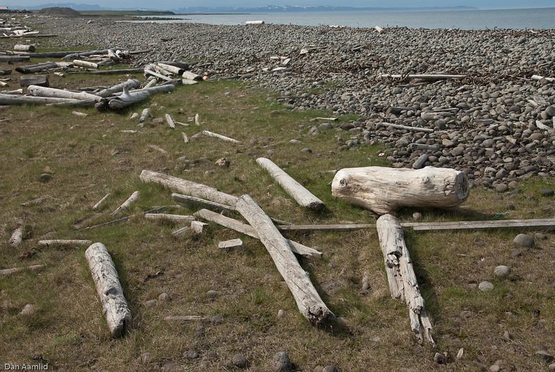 Drivved, Saudanes, Island 2009
