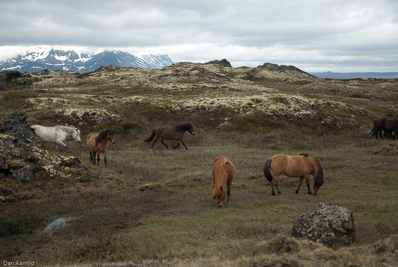 Landscape of Iceland, Myvatn,June 2009 (map it!)