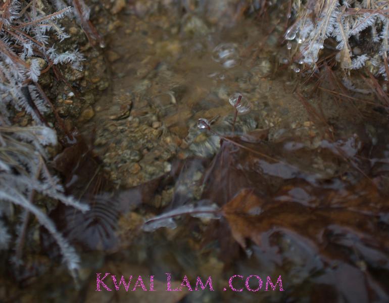 MA-Winter-2011_KwaiLam-6039