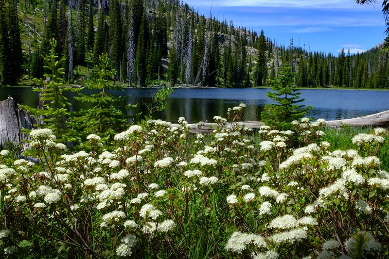 Alpine Azaleas at Duck Lake