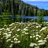 Alpine Azaleas at Duck Lake