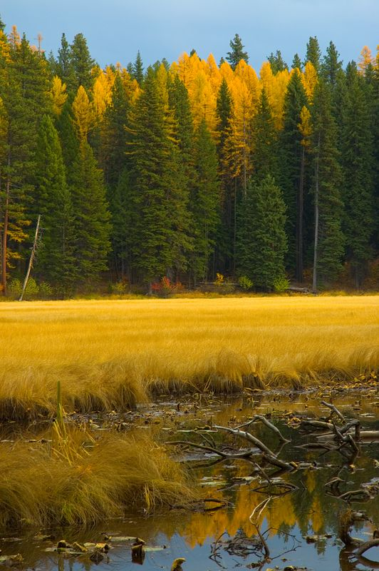 Meadow Marsh, Ponderosa State Park