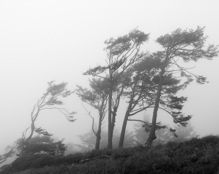 Kalaloch Fog