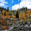Aspens near Lick Creek Summit