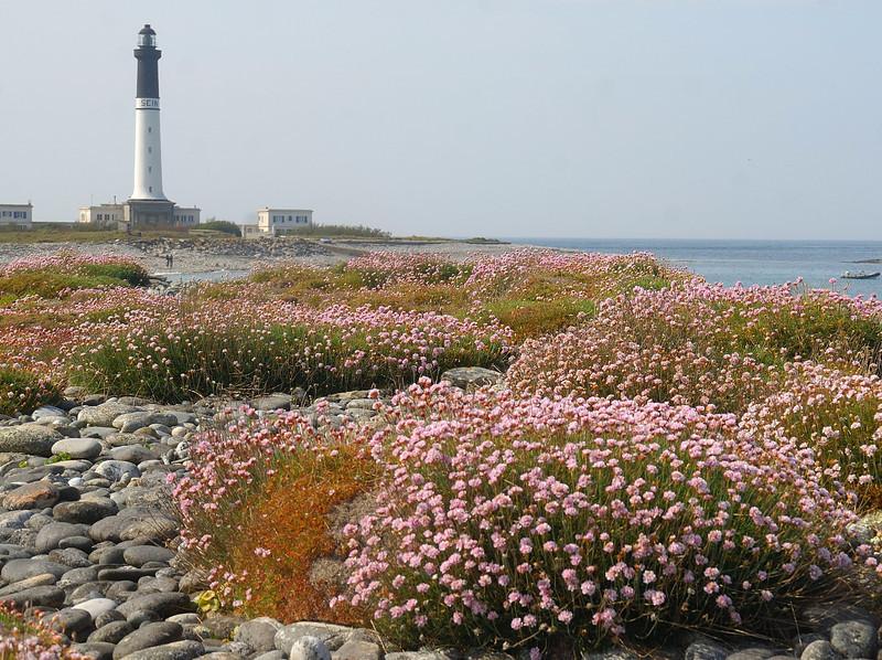 Les fleurs du phare