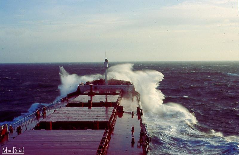 Cyrena en mer Baltique