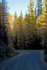 Larch on FS 9712, accessed from Blewett pass, via FS 9716.