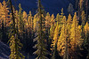 Larch, seen from FS 9712, accessed from Blewett pass, via FS 9716.