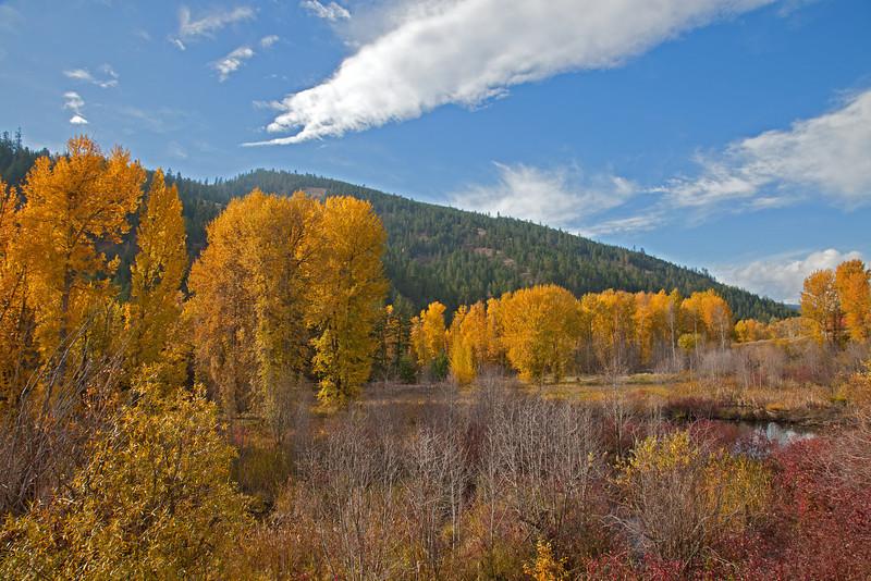 Fall color along Twisp River road.