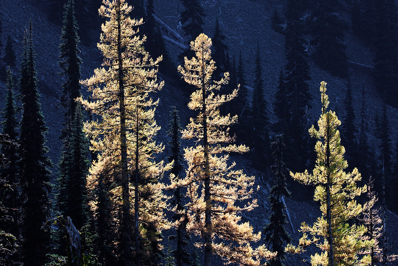 Larch (shot from FS 9712, accessed from Blewett pass, via FS 9716).
