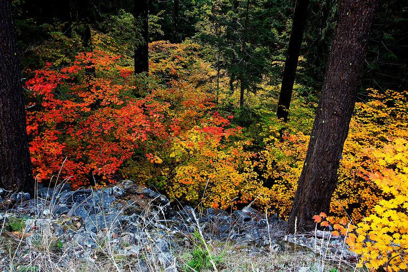 Fall color along SR 20.