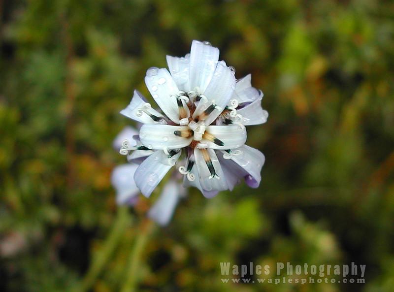 N4260 Flora Closeup-124