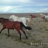 N3763 Galloping Horses-17