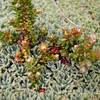 N3750 Flora Closeup-13