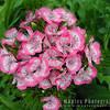 N4158 Flora Closeup-112