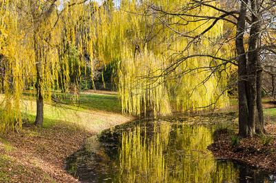 Malmsbury Botanical Gardens - lake
