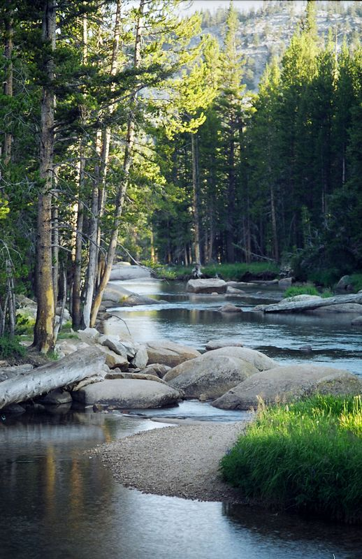 Tuolumne River, Lyell Fork, Yosemite, California