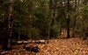 York Regional Forest