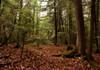 York Regoinal Forest