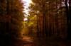 Jefferson Forest