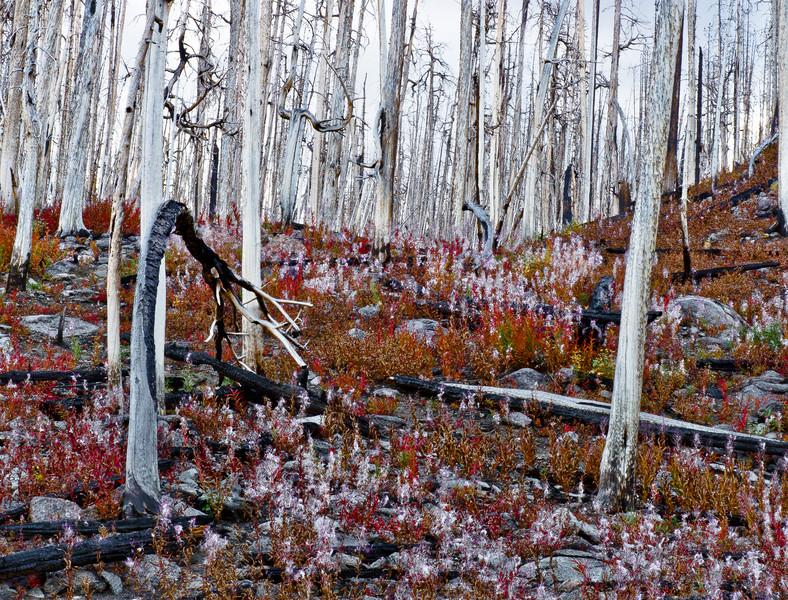 Doubletop Mountain Burn, Wind River Range, Sublette County, WY 2011<br /> © Edward D Sherline