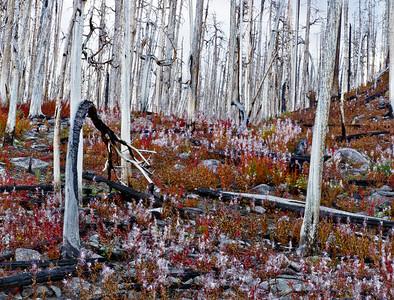 Doubletop Mountain Burn, Wind River Range, Sublette County, WY 2011 © Edward D Sherline