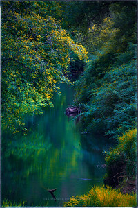 Suislaw River meandering through  the  forest near Eugene, Oregon.